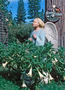 Terra-Flora-Angel