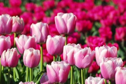 festeje-a-primavera-na-festa-da-flor