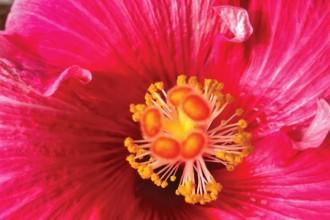 Desafios da Terapia Floral